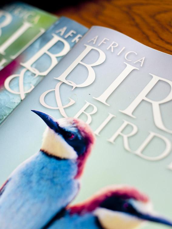 Bird watching in Plett